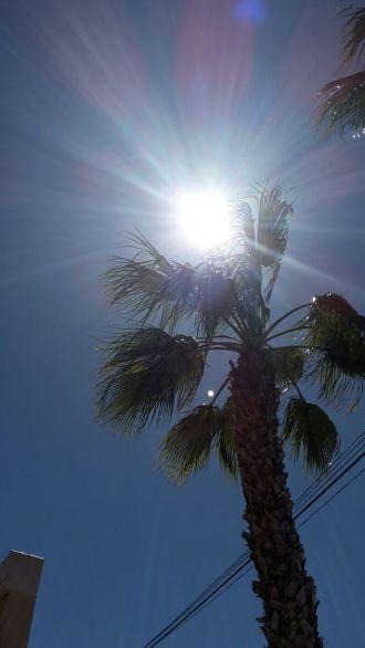 Jag älskar att se palmer varje dag.