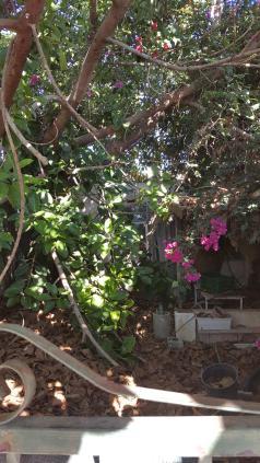 Huset i djungeln.